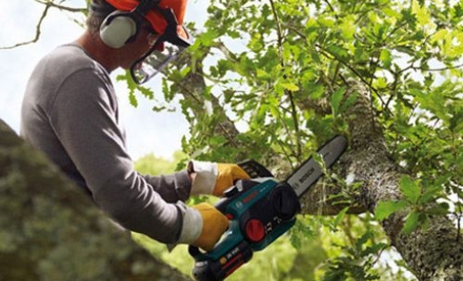 Почему нужно доверять обрезку деревьев профессионалам