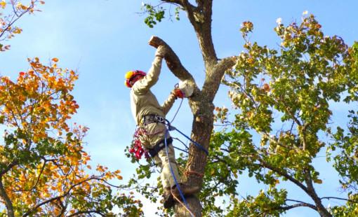 Услуги по кронированию деревьев в Вологде