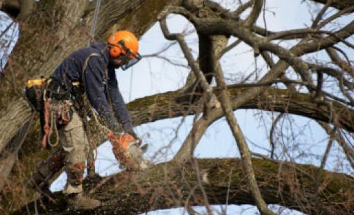 Заказать услугу спила деревьев в Вологде
