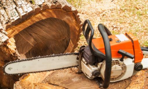 Когда необходимо спиливать деревья во дворе