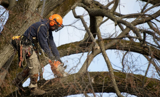 Заказать услугу кронирования деревьев в Вологде