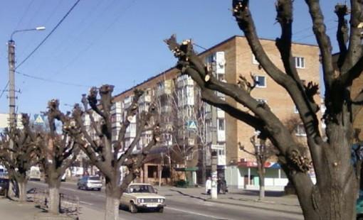 Кронирование деревьев: особенности, требования и нормы