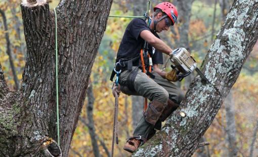 Спил деревьев: особенности и нормы